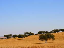 Terrenos e lotes
