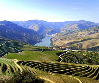 Investissements locatifs, hôtels, vignes, oliveraies
